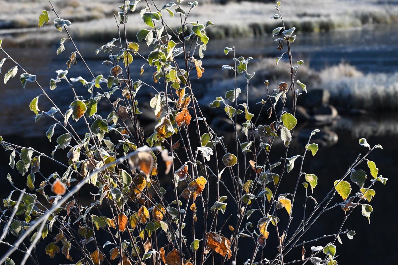 Et bilde som inneholder utendørs, gress, blomst, felt  Automatisk generert beskrivelse