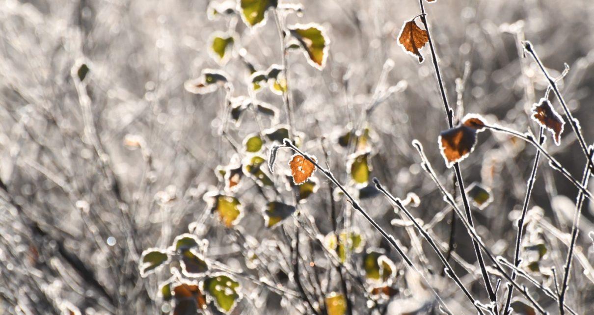 Et bilde som inneholder utendørs, gress, felt, blomst Automatisk generert beskrivelse