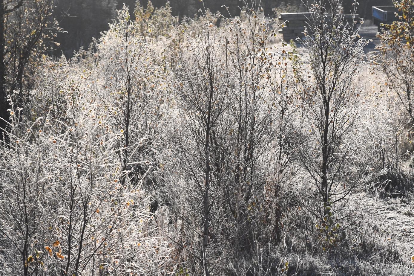 Et bilde som inneholder utendørs, gress, tre, snø  Automatisk generert beskrivelse