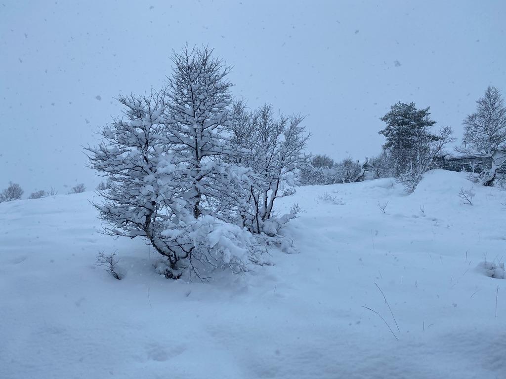 Et bilde som inneholder snø, utendørs, tre, natur  Automatisk generert beskrivelse