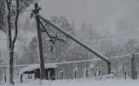 Et bilde som inneholder tre, utendørs, snø, skog Automatisk generert beskrivelse