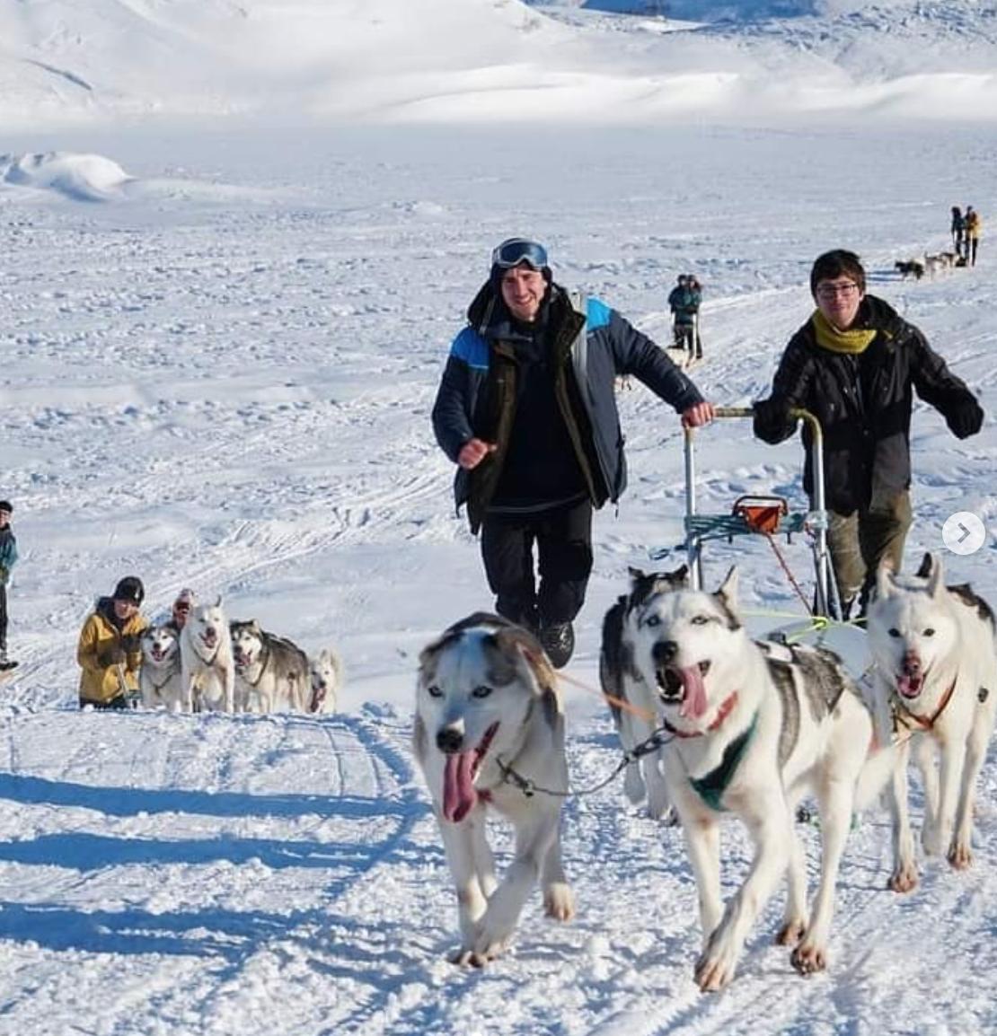 Et bilde som inneholder hund, snø, transport, utendørs  Automatisk generert beskrivelse
