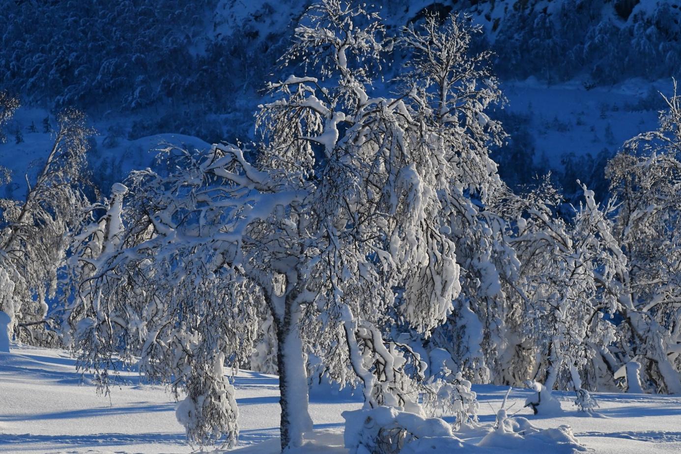 Et bilde som inneholder snø, utendørs, tre, plante  Automatisk generert beskrivelse