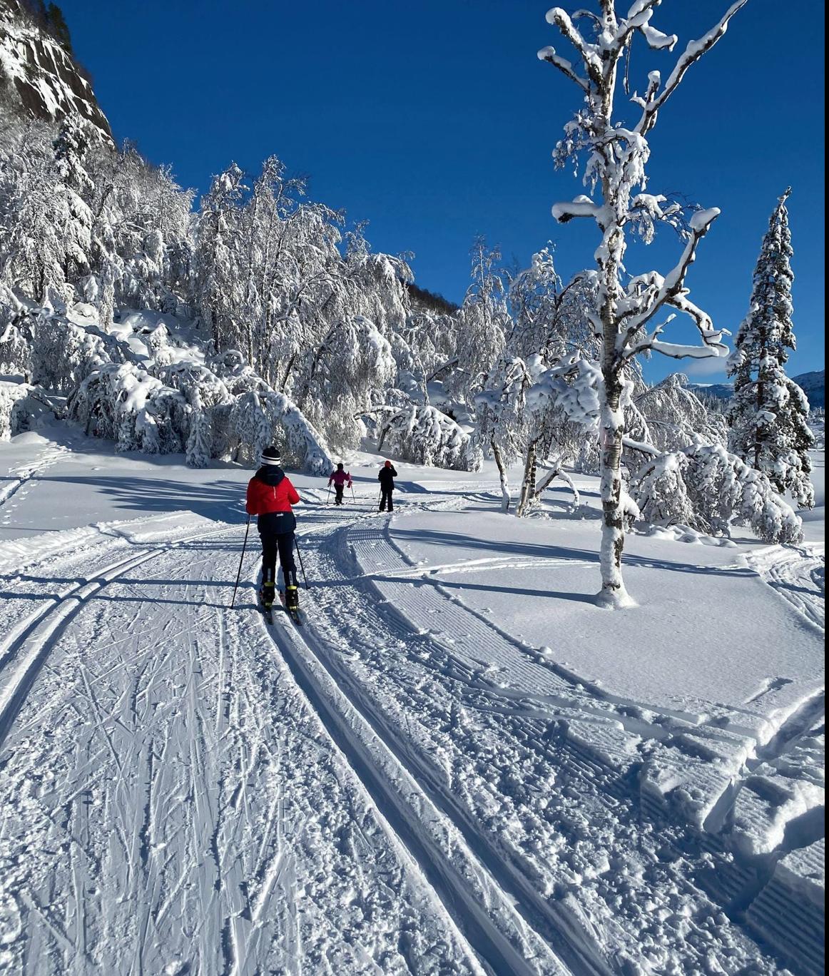 Et bilde som inneholder utendørs, snø, tre, gå på ski  Automatisk generert beskrivelse