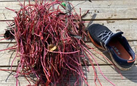Et bilde som inneholder utendørs, bakke, grønnsak, sko Automatisk generert beskrivelse