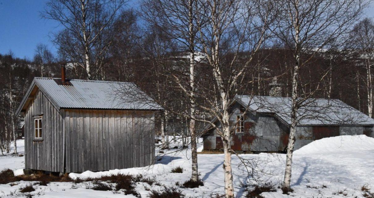 Et bilde som inneholder snø, utendørs, tre, dekket Automatisk generert beskrivelse
