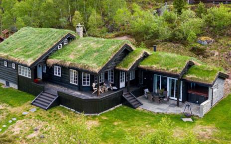 Et bilde som inneholder gress, tre, utendørs, grønn Automatisk generert beskrivelse