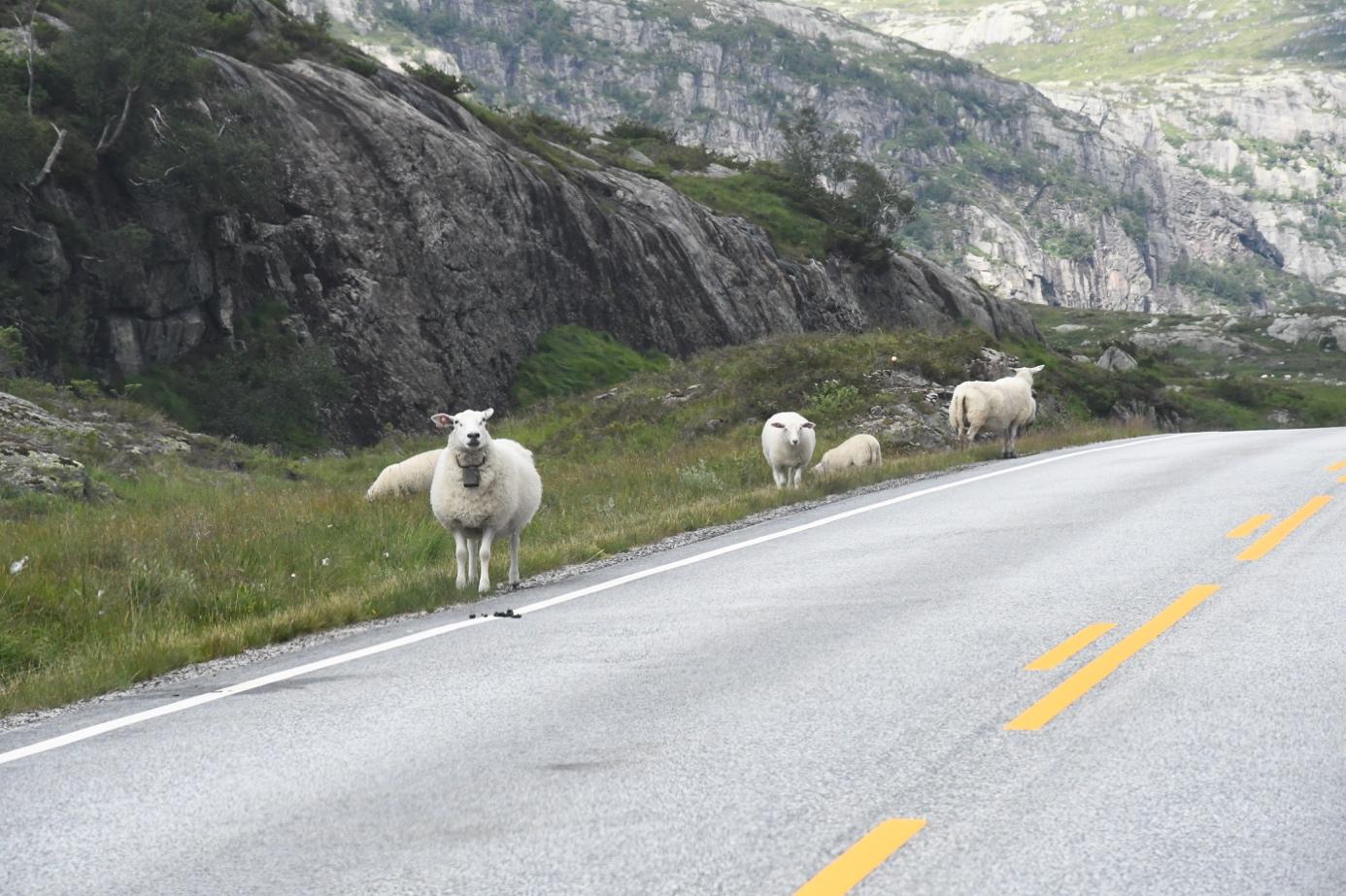 Et bilde som inneholder bilvei, utendørs, fjell, gress  Automatisk generert beskrivelse