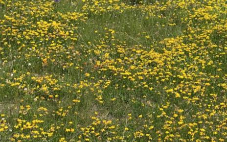 Et bilde som inneholder gress, utendørs, blomst, felt Automatisk generert beskrivelse