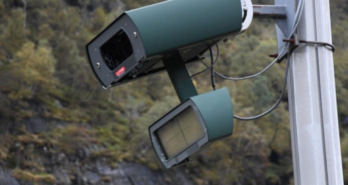 Et bilde som inneholder tre, utendørs Automatisk generert beskrivelse