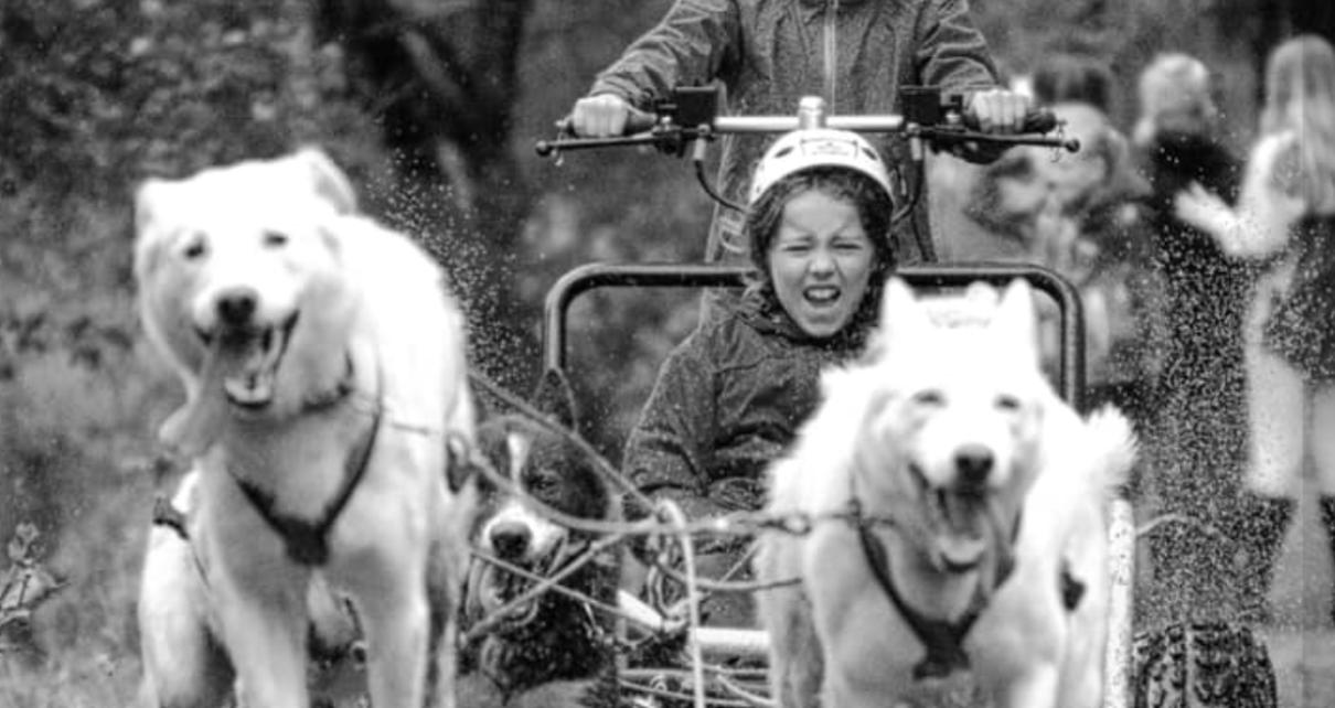 Et bilde som inneholder utendørs, gress, tre, hund Automatisk generert beskrivelse