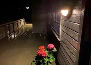 Et bilde som inneholder innendørs, gulv, blomst, tre Automatisk generert beskrivelse